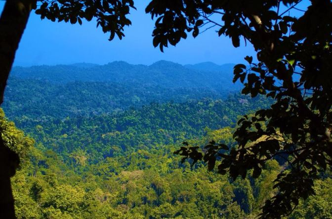 15 Reasons To Do The Gibbon Experience In Laos